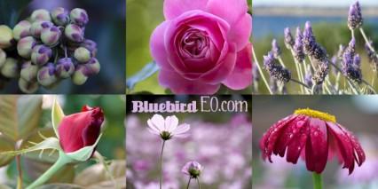 free-pics-flowers1